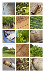 Set, collection, vignoble, vin, vendange, viticole, Bordeaux