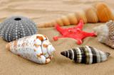 starfish and shells on the sand
