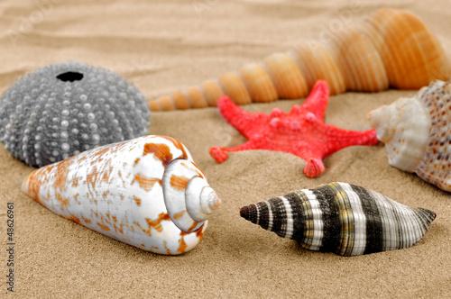 starfish and shells on the sand - 48626961