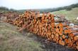 Industria maderera, troncos de eucaliptos apilados