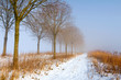 Sunlit row of trees and reed in fog