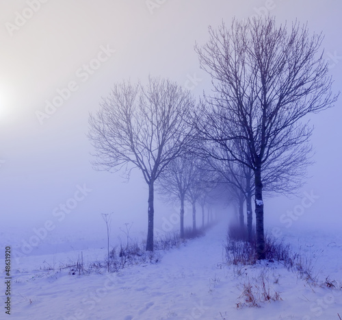 Atmospheric winter landscape