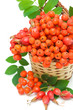 red rowan berries and rose hips in a wicker basket