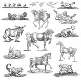 Animals  set illustration