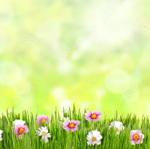 Frühlingswiese mit Blumen