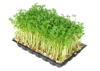 Watercress in a plastic tray on a white background