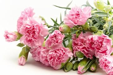 Claveles de color rosa sobre fondo blanco