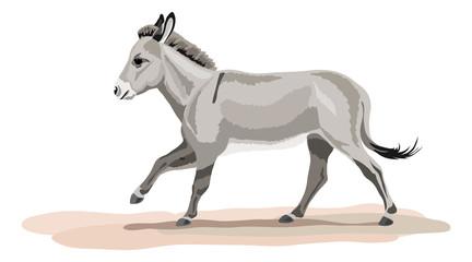 galoppierender Esel