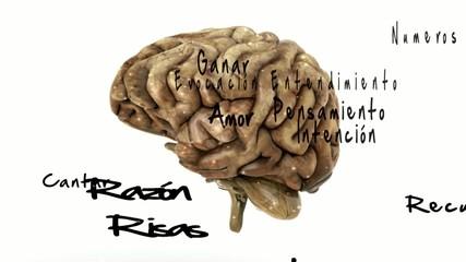 Cerebro y pensamiento