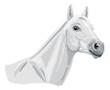 weißes arabisches Pferd - Kopfstudie