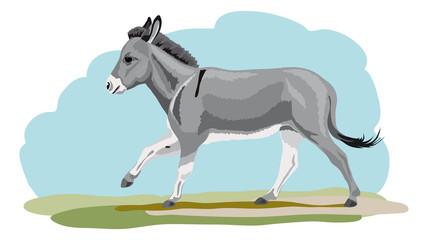 galoppierender grauer Esel
