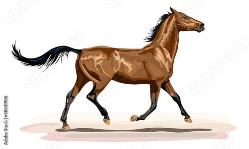 glänzendes Pferd im Trab