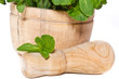 fresh mint in a wooden mortar on the white background