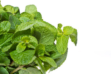 fresh green mint on a white background