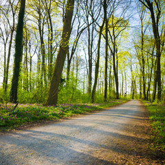 Sonniger Frühlingstag, Wald, Naherholungsgebiete