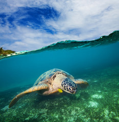 Turtle swimming on the sea bottom
