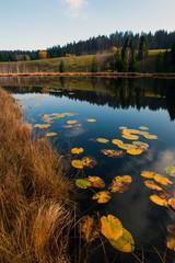 Couleurs automnales sur l'étang