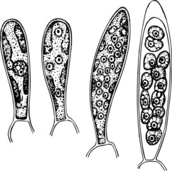 Some different spores