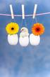 Eier an Leine hängend mit Küken und Blumen