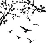Fototapete Hintergrund - Vögel - Vögel