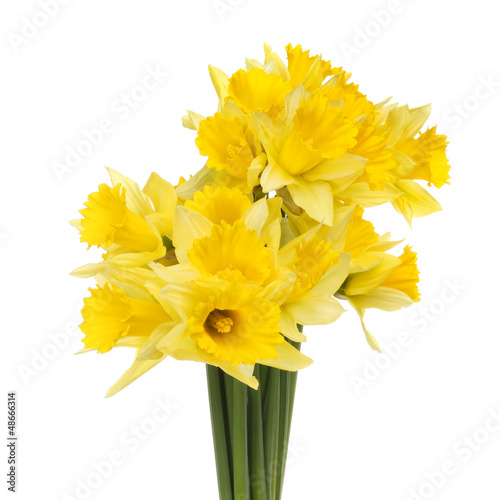 Canvas Narcis Bunch of daffodils
