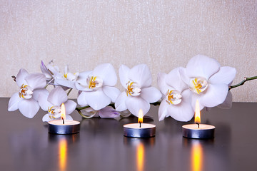Candle & Orchid