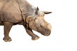rhinoceros on white background
