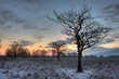 Silhouette of bare oak in snow just before sunrise