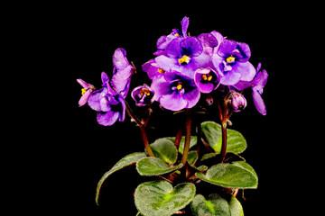 Detail einer blühenden Blume.