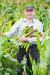 man with a crop of maize
