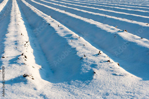 Asparagus beds covered with snow