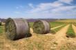 Lavendelfeld Ernte - lavender field harvest 20