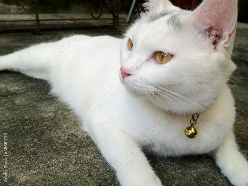 White cat kitten is  looking