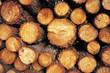 Madera de pino, industria maderera