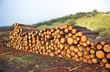 Materias primas, madera de pino