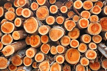 Explotación forestal, madera de eucaliptos cortada