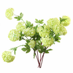 "bouquet of artificial Viburnum ""Buldenezh"" on a white background"