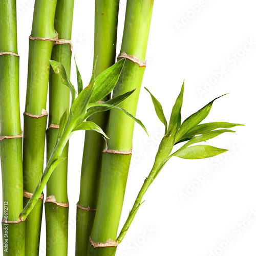 Bamboo and bamboo leaf on white background © somchaij