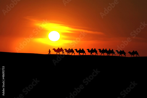 camel caravan with sunset