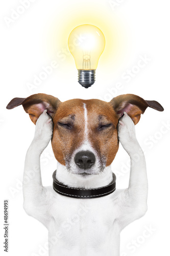 smart intelligent dog