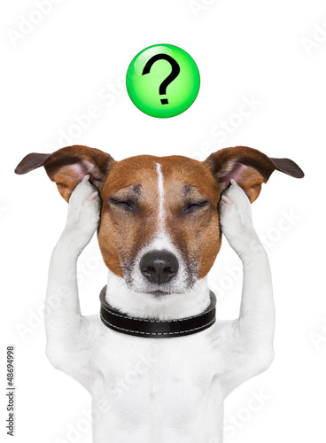 dog question mark