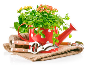 green plant in red watering can with garden tool isolated