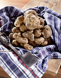 White truffles on a napkin