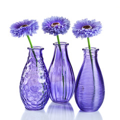 Blue flowers in vases isolated on white