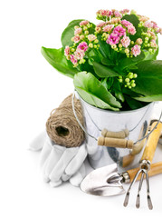 spring flower in bucket with garden tool and gloves and