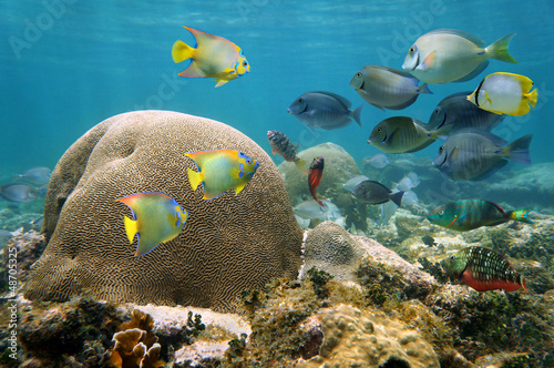 Brain coral with many colorful fishes