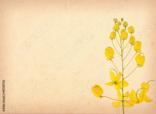 yellow flower blossom on old antique vintage paper background