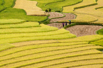 terrced rice fields - three women visit their rice fields in Mu