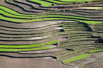 terraced rice fields with water in Sapa, Vietnam