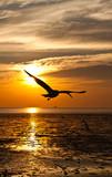 Fototapeta plaża - dziób - Morze / Ocean